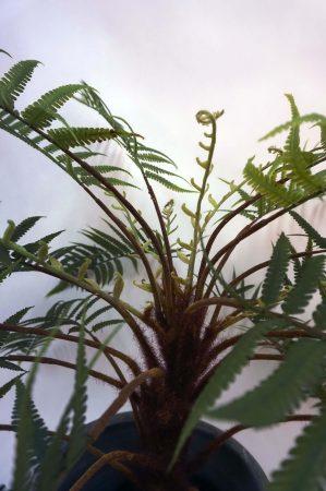 Ormbunke, konstgjord krukväxt-4551