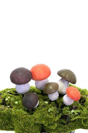 svampar Karl Johan, 6-pack-0