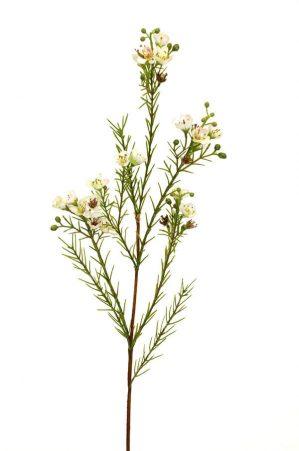 Vaxblomma, creme, konstgjord blomma-0