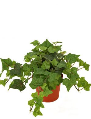 Murgröna, konstgjord krukväxt-0