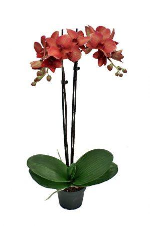 Orkidé, vinröd, konstgjord-0