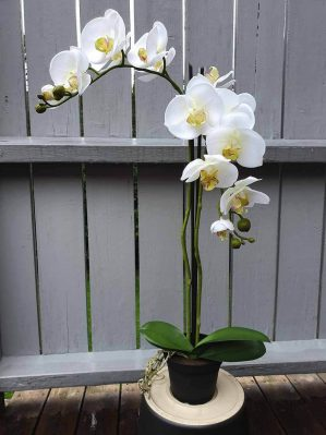 Orkidé i kruka, 2-stängel, vit, konstgjord-0
