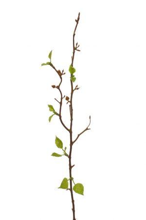 Björkkvist, konstgjord kvist, blomma-0