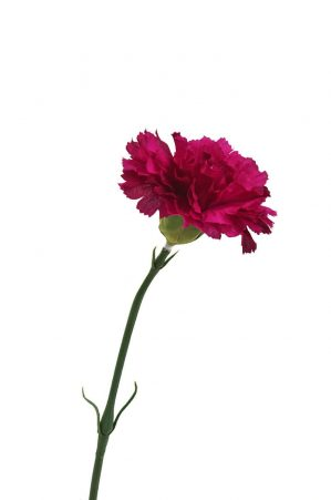 Nejlika, lila cerise, konstgjord blomma-0