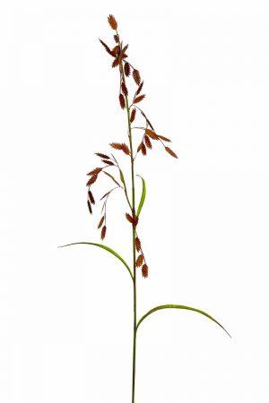 Gräs, konstgjort, brunt med ax-0