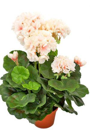 Pelargon, creme/rosa, konstgjord krukväxt-0