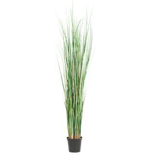 gräs i kruka-0