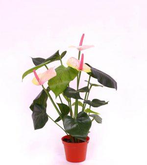 Anthurium, flamingo, ljusrosa, konstgjord-0