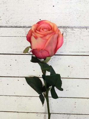 Ros, lax, aprikos melerad, konstgjord blomma-0