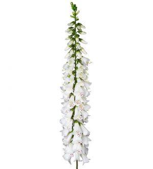 Fingerborgsblomma, vit, jättestor, konstgjord blomma-0