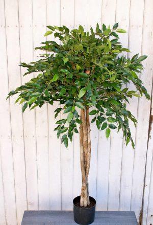 Ficus Natasja uppstammad, konstgjort träd-0