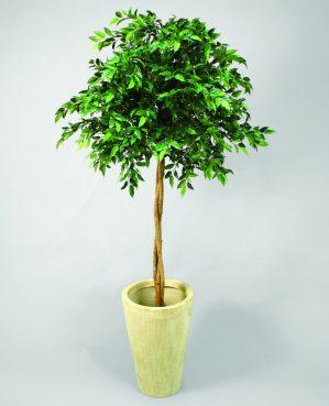 Ficus Natasja uppstammad, konstgjort träd-5772
