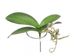 Orkidéblad, mindre, konstgjort-0