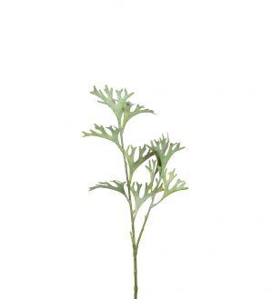 Älghornsbräken, konstgjord kvist-0