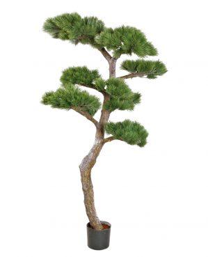 Tall, Pinus, konstgjord-0