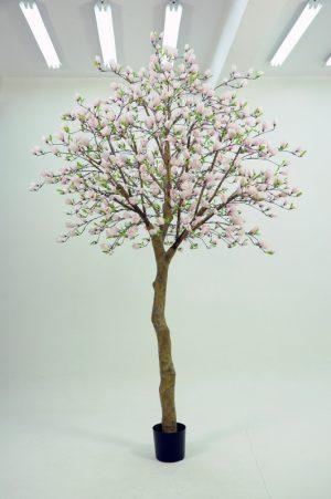 Magnolia träd 350cm-0