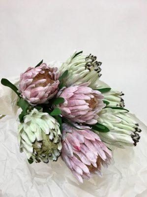 Protea vit lime, konstgjord blomma-4659