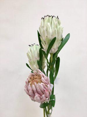 Protea vit lime, konstgjord blomma-4658