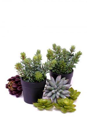 Succulent i kruka, konstgjord-0