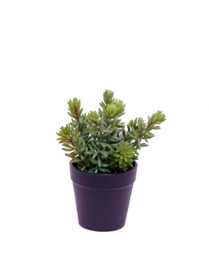 Succulent i kruka, konstgjord-4833