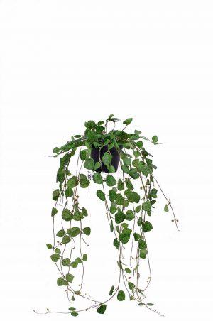 Hjärtan på tråd i kruka, vine green, konstgjord-0