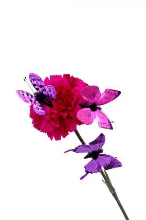 fjäril, lila 3-pack-0