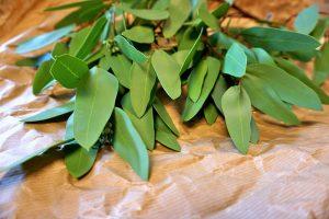 Eucalyptus, Real Touch, konstgjord grön kvist-0
