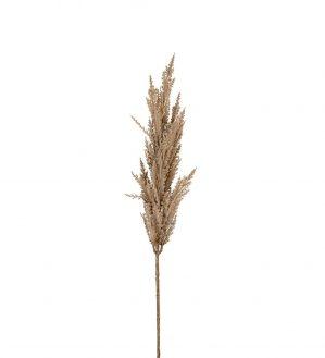 Pampasgräs, naturfärgat, torkat, konstgjort gräs-5949