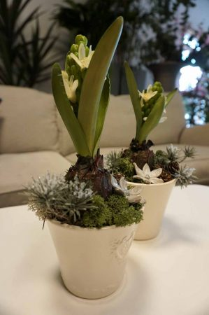 Konstgjord plantering med hyacint på lök-0