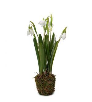 Snödroppe, Galanthus, konstgjord planta-0