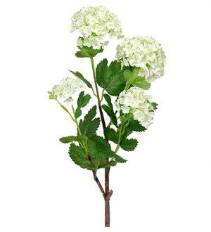 Olvon, Viburnum, konstgjord kvist-0
