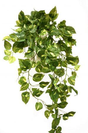 Gullranka, Epipremnum, konstgjord växt-6379