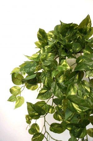 Gullranka, Epipremnum, konstgjord växt-6380