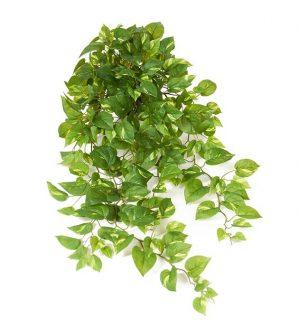 Gullranka, Epipremnum, konstgjord växt-0