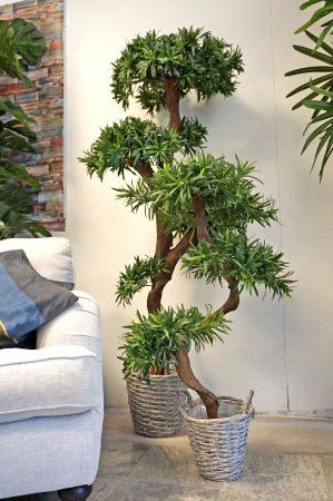 Producarpus träd, konstgjort, 170cm-0