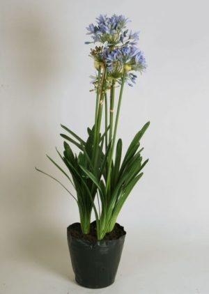 Agapanthus, Afrikas blå lilja, konstgjord blomma-0