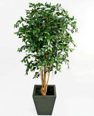 Ficus retusa, konstgjort träd-0